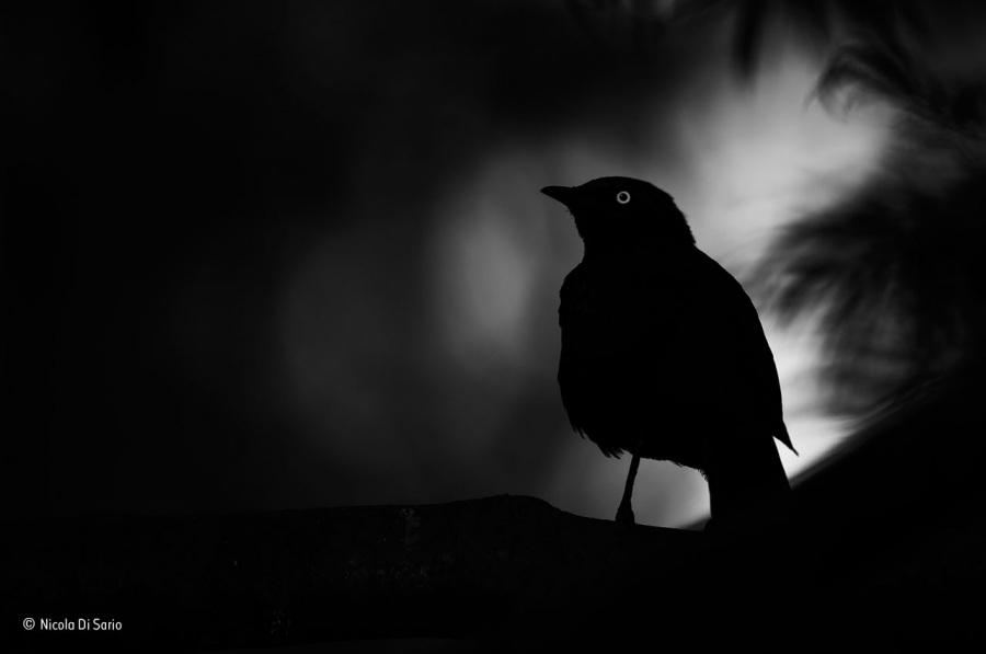 © Nicola Di Sario, Eye-light
